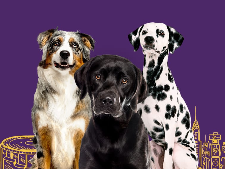 Westminster Dog Show Tickets Madison Square Garden