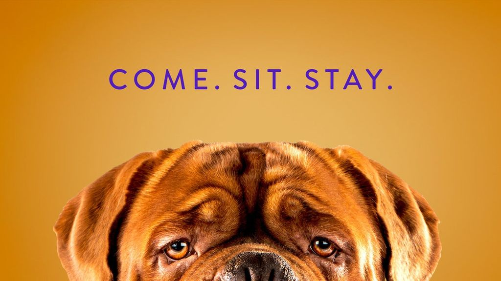 Westminster Best In Show 2021 Westminster Kennel Club Dog Show 2021 Ticket Alerts | Madison